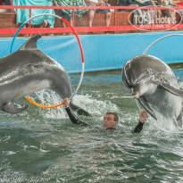 Риека Дельфины Карадагского дельфинария. - Фото отеля