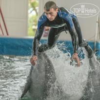 Риека В Карадагском дельфинарии. - Фото отеля
