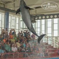 Риека Прыжок дельфина.Карадагский дельфинарий. - Фото отеля