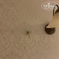 Селена 3* В этом году было нашествие стрекоз - Фото отеля
